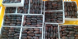 نمایندگی فروش انواع خرما ربی ایرانشهر