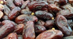قیمت خرید خرما ربی ایرانشهر